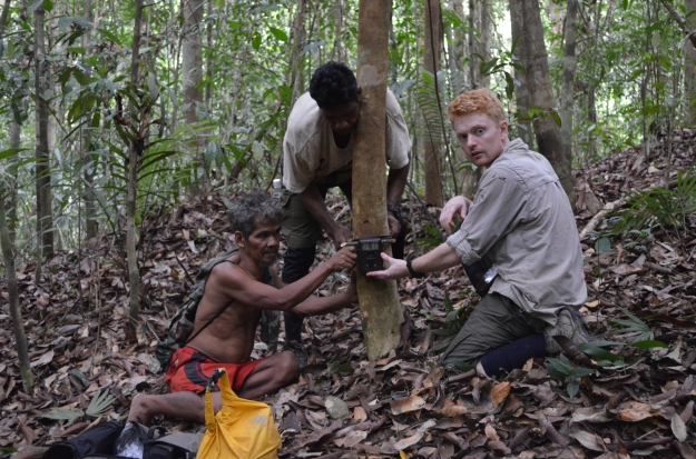 Tok Sumpeh, Lah and Jon Moore setting up a camera trap. We have shown that fruit gardens established by forest-dwelling Chewong people increase the diversity and biomass of terrestrial frugivores in this forest (Moore et al. in press).