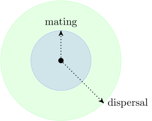 Relative ranges of mating and dispersal vary among species.